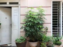Cho thuê nhà riêng mặt ngõ rộng phố Lò Đúc.dt 100m2,DTSD 70m2x3,5 tầng