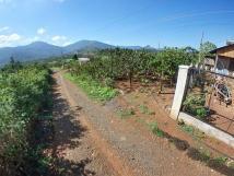 Bán lô đất thổ vườn 2163 m2 ở Xã Đinh Lạc - Huyện Di Linh - Tỉnh Lâm Đồng