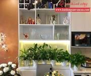Cho thuê nhà riêng tại Đường Anh Đào 1-9, Phường Việt Hưng, Long Biên, Hà Nội diện tích 350m2