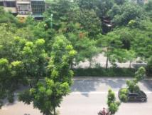 Chính chủ cần cho thuê căn hộ tập thể tại: Phường Thành Công - Ba Đình - Hà Nội